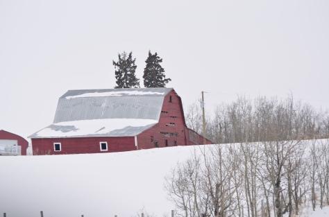 Falling Apart Red Barn