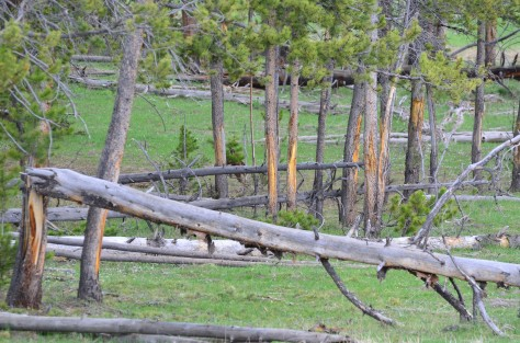 Yellowstone May 2014 1246