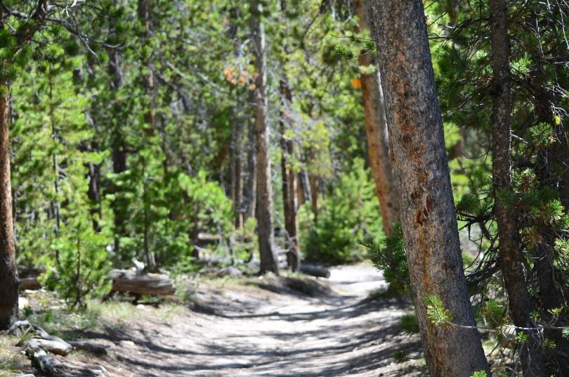 Quiet little hiking trail.