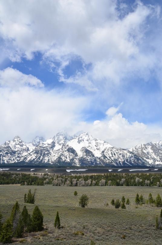 Yellowstone May 2014 905