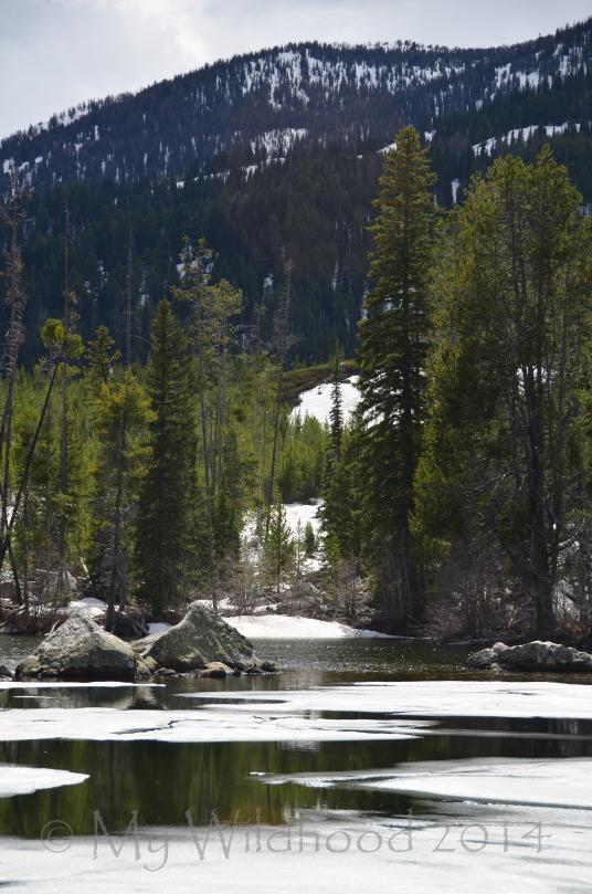 Yellowstone May 2014 1034