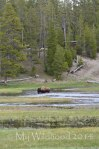 Yellowstone May 2014 1321