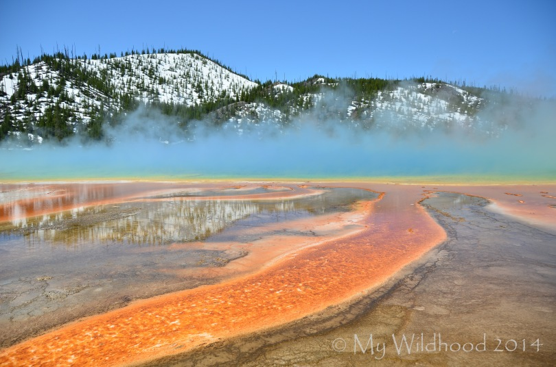 Yellowstone May 2014 1663