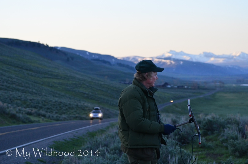 Ranger Rick performs his wolf surveys voluntarily, because the wolf monitoring program budget has been cut.
