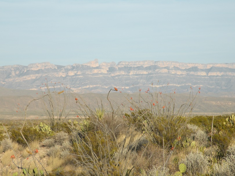 Ocotillo (pronounced Oh-co-tee-yo) blooming in the low desert, which the Carmens in the background.
