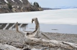 Driftwood on Yellowstone Lake
