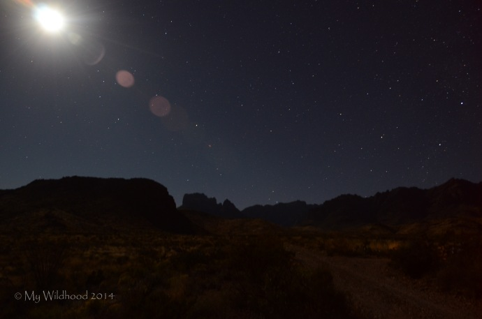 Moon and stars over the desert