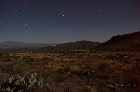 The desert floor was lit up by moonlight