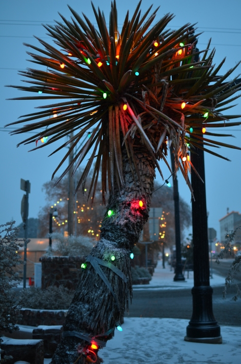 Snow and lights decorate the Yucca