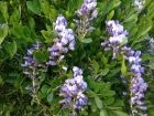 Smell the Mountain Laurel