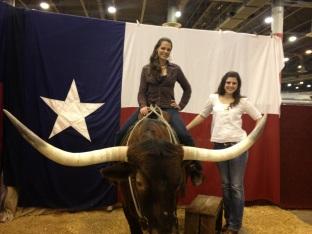 Go to the Houston Rodeo