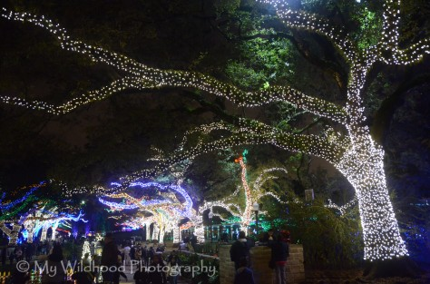 The lights in the trees dance to music