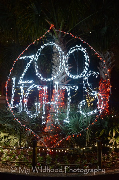 Zoo Lights!