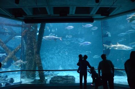 Huge shark tank
