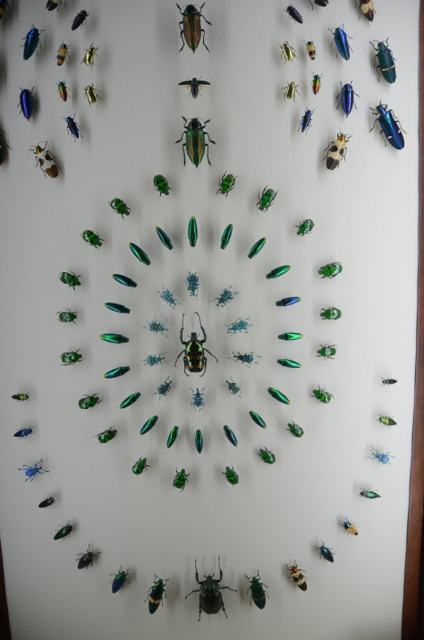 Beautiful insect displays at the Insectarium